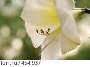 """Купить «""""патефон""""», фото № 454937, снято 25 мая 2008 г. (c) Владислав Грачев / Фотобанк Лори"""