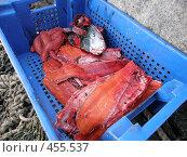 Купить «Камчатская нерка», фото № 455537, снято 7 июня 2008 г. (c) Салякин Виталий Валерьевич / Фотобанк Лори