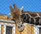 Москва. Зоопарк.Жираф., эксклюзивное фото № 458749, снято 24 июля 2008 г. (c) lana1501 / Фотобанк Лори