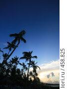 Купить «Вечер в тропиках», фото № 458825, снято 2 июля 2008 г. (c) Hemul / Фотобанк Лори