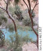 Озеро в горном оазисе. Стоковое фото, фотограф Софья Краевская / Фотобанк Лори