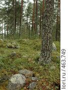 Лес в Карелии после дождя. Стоковое фото, фотограф Юлия Яковлева / Фотобанк Лори