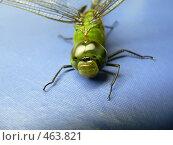 Купить «Эти удивительные стрекозы», фото № 463821, снято 16 ноября 2006 г. (c) Ivan / Фотобанк Лори