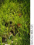 Купить «Трава в лесу», фото № 465121, снято 6 сентября 2008 г. (c) Сергей Пестерев / Фотобанк Лори