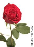 Купить «Одна красная роза на белом фоне», фото № 467057, снято 12 октября 2007 г. (c) Останина Екатерина / Фотобанк Лори