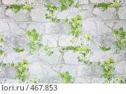 Купить «Листья на камнях», иллюстрация № 467853 (c) Losevsky Pavel / Фотобанк Лори
