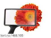 Купить «Цветок через стекло», фото № 468105, снято 18 сентября 2019 г. (c) Losevsky Pavel / Фотобанк Лори