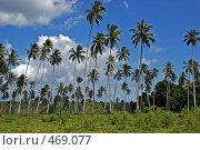 Купить «Пальмовый лес», фото № 469077, снято 24 июня 2008 г. (c) Купченко Владимир Михайлович / Фотобанк Лори