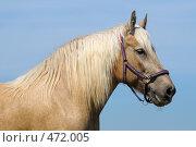 Купить «Портрет лошади соловой масти», фото № 472005, снято 11 июля 2008 г. (c) Абрамова Ксения / Фотобанк Лори