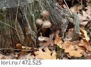 Поганки. Стоковое фото, фотограф Сергей Усс / Фотобанк Лори