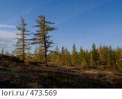 Купить «Осенняя тундра», фото № 473569, снято 5 сентября 2008 г. (c) Назаренко Ольга / Фотобанк Лори