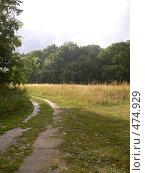 Купить «Дорога на лесной поляне», фото № 474929, снято 31 августа 2008 г. (c) Баева Татьяна Александровна / Фотобанк Лори