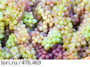 Купить «Виноград», фото № 476469, снято 24 сентября 2008 г. (c) Сергей Лаврентьев / Фотобанк Лори