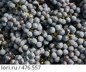 Купить «Фон: виноград», фото № 476557, снято 21 сентября 2008 г. (c) Denis Kh. / Фотобанк Лори