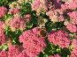 Сентябрь: цветы и бабочка, фото № 476857, снято 24 сентября 2008 г. (c) Ирина Трофимова / Фотобанк Лори