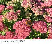 Сентябрь: цветы и бабочка. Стоковое фото, фотограф Ирина Трофимова / Фотобанк Лори