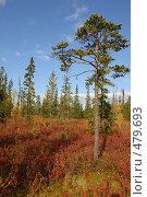 Купить «В осеннем лесу», фото № 479693, снято 11 сентября 2008 г. (c) Владимир Тимошенко / Фотобанк Лори