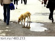 Купить «Бездомный пёс», фото № 483213, снято 30 мая 2008 г. (c) Дмитрий Лемешко / Фотобанк Лори