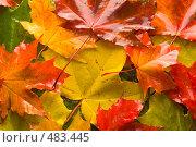 Купить «Краски осени», фото № 483445, снято 27 сентября 2008 г. (c) Дмитрий Боев / Фотобанк Лори