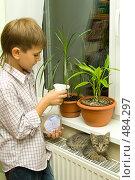 Купить «Мальчик ухаживает за цветами», фото № 484297, снято 29 сентября 2008 г. (c) Ольга Красавина / Фотобанк Лори