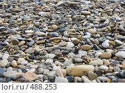 Купить «Морская галька», фото № 488253, снято 20 августа 2008 г. (c) Алина Акимова / Фотобанк Лори