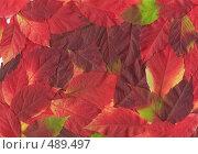 Купить «Фон из темно-красных листьев», фото № 489497, снято 29 января 2020 г. (c) ElenArt / Фотобанк Лори