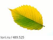 Купить «Осенний лист», фото № 489525, снято 19 сентября 2018 г. (c) ElenArt / Фотобанк Лори