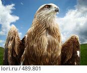 Купить «Хищная птица», фото № 489801, снято 31 мая 2008 г. (c) Карелин Д.А. / Фотобанк Лори