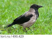 Купить «Ворона», фото № 490429, снято 1 октября 2005 г. (c) Юлия Сайганова / Фотобанк Лори