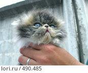 Купить «Маленький котенок», фото № 490485, снято 23 апреля 2018 г. (c) ElenArt / Фотобанк Лори