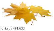 Желтые осенние листья клена. Стоковое фото, фотограф Сергей Усс / Фотобанк Лори