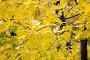 Осенняя листва, фото № 493049, снято 4 октября 2008 г. (c) Сергей Лаврентьев / Фотобанк Лори
