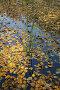 Осенний пруд, фото № 493869, снято 4 октября 2008 г. (c) Наталья Волкова / Фотобанк Лори