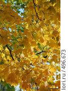 Осенние кружева. Стоковое фото, фотограф николай шишкин / Фотобанк Лори