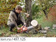 Купить «Мужчина пилит березу на дрова», фото № 497125, снято 4 октября 2008 г. (c) Галина Ермолаева / Фотобанк Лори