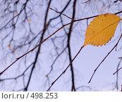 Купить «Осенний лист на фоне неба», фото № 498253, снято 5 октября 2008 г. (c) Юрий Винокуров / Фотобанк Лори