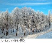 Купить «Зимний пейзаж», фото № 499485, снято 26 апреля 2019 г. (c) ElenArt / Фотобанк Лори