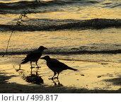 Купить «Две вороны у реки», фото № 499817, снято 13 сентября 2008 г. (c) Игорь Муртазин / Фотобанк Лори