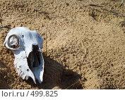 Купить «Череп барана в степи», фото № 499825, снято 17 сентября 2008 г. (c) Игорь Муртазин / Фотобанк Лори