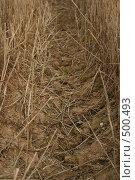 Купить «След от трактора на сухом поле пшеницы», фото № 500493, снято 22 августа 2008 г. (c) Cangaroo / Фотобанк Лори