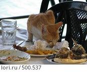 Шустрый кот. Стоковое фото, фотограф Azaria Iounaev / Фотобанк Лори