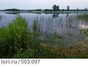 Купить «На берегу озера ранним пасмурным утром», фото № 503097, снято 21 июня 2008 г. (c) Дмитрий Яковлев / Фотобанк Лори