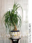 Купить «Бокарнея», фото № 505401, снято 12 октября 2008 г. (c) Елена Блохина / Фотобанк Лори