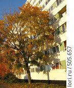 Купить «Осень в городе», фото № 505657, снято 8 октября 2008 г. (c) Юлия Подгорная / Фотобанк Лори