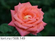 Роза. Стоковое фото, фотограф Александр Бутенко / Фотобанк Лори