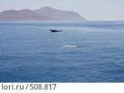 Купить «Дельфин в прыжке», фото № 508817, снято 6 апреля 2008 г. (c) Владимир Чмелёв / Фотобанк Лори