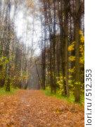 Купить «Аллея в осеннем лесу», фото № 512353, снято 17 октября 2008 г. (c) Малютин Павел / Фотобанк Лори