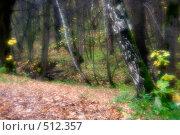 Купить «Лес осенью. Золотая осень», фото № 512357, снято 17 октября 2008 г. (c) Малютин Павел / Фотобанк Лори