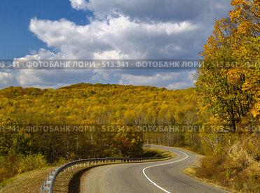 Осенний лес и дорога