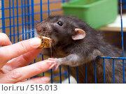 Купить «Большой кусочек», фото № 515013, снято 15 ноября 2007 г. (c) Argument / Фотобанк Лори